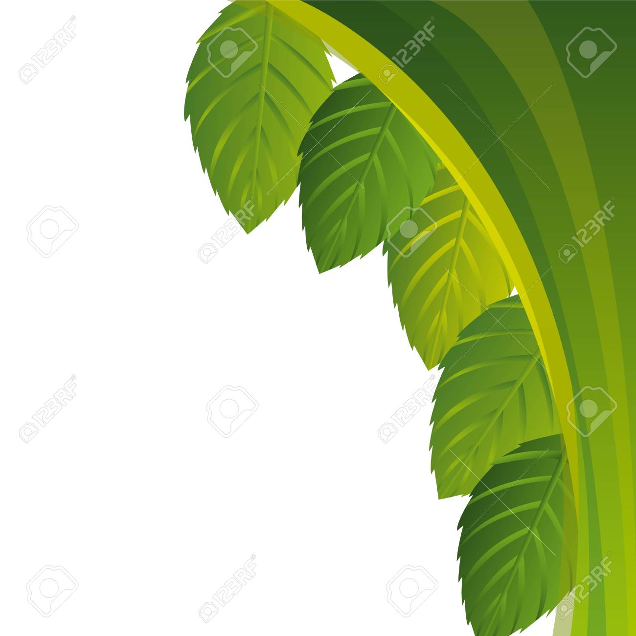 green leaves wit space for copy Stock Vector - 14214992