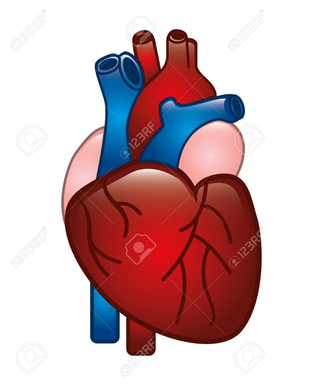 Human Heart Design Over White Background Royalty Free Cliparts