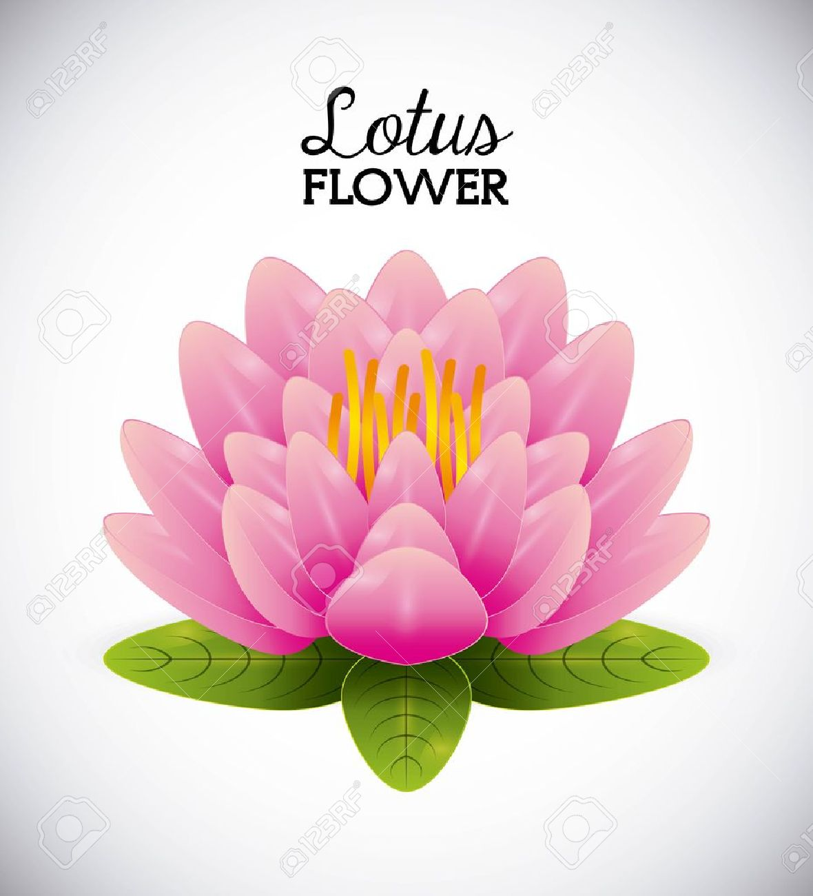 Lotus Flower Design Vector Illustration Graphic Royalty Free