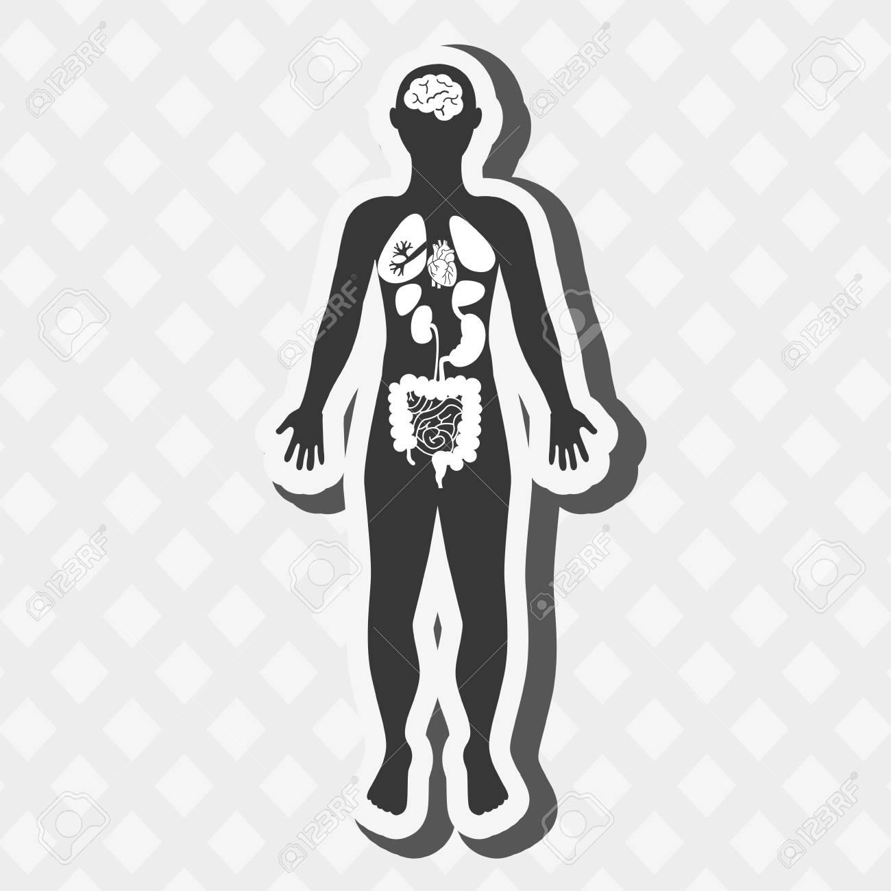 Asombroso Fundador De La Anatomía Moderna Friso - Imágenes de ...