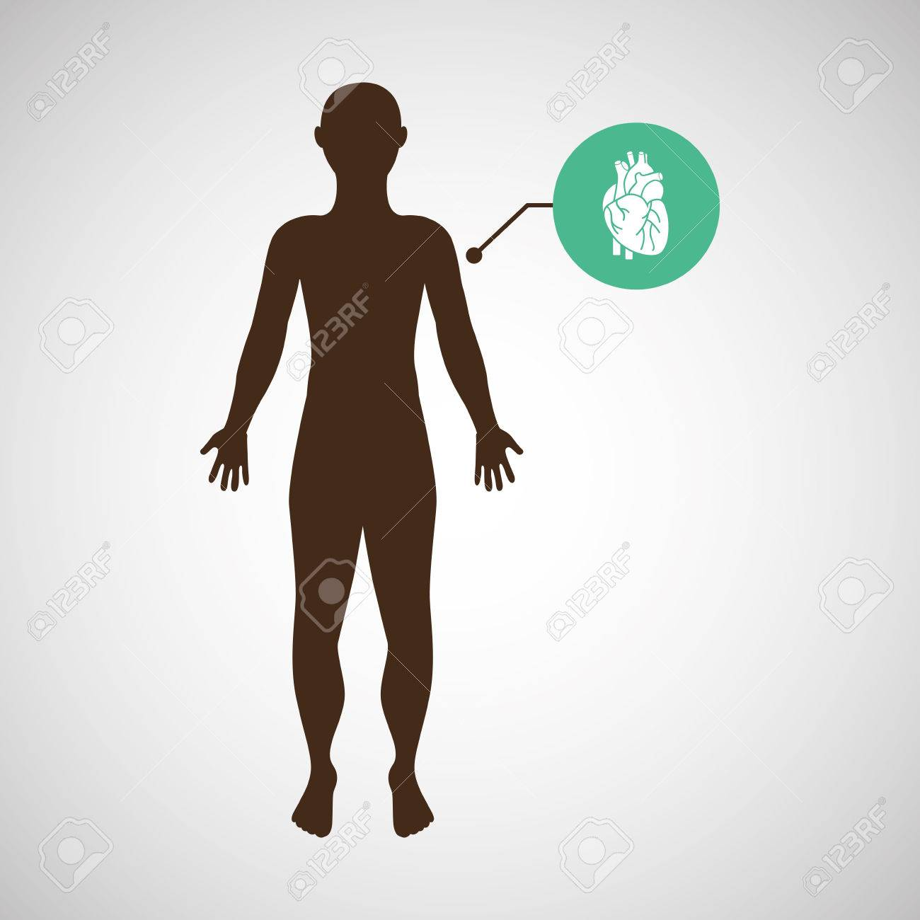 Silueta Hombre Corazón Anatomía Cuerpo Ilustración Vectorial ...