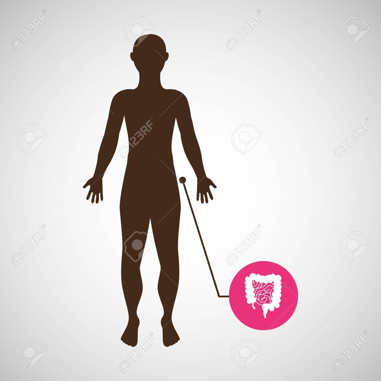 Silhouette Mann Darm Anatomie Körpervektor Lizenzfrei Nutzbare ...