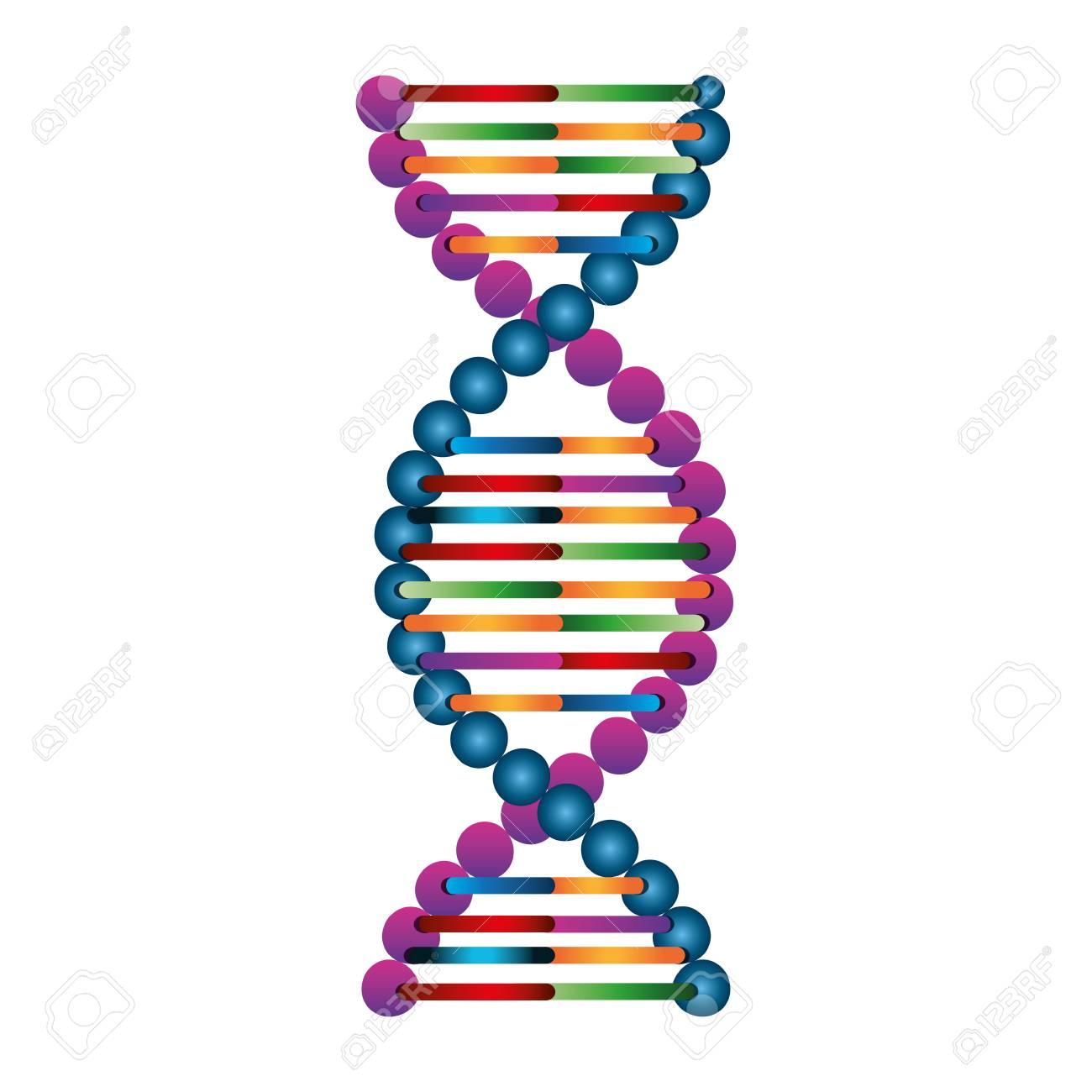 Estructura Molecular De Adn Ilustración Vectorial De Diseño