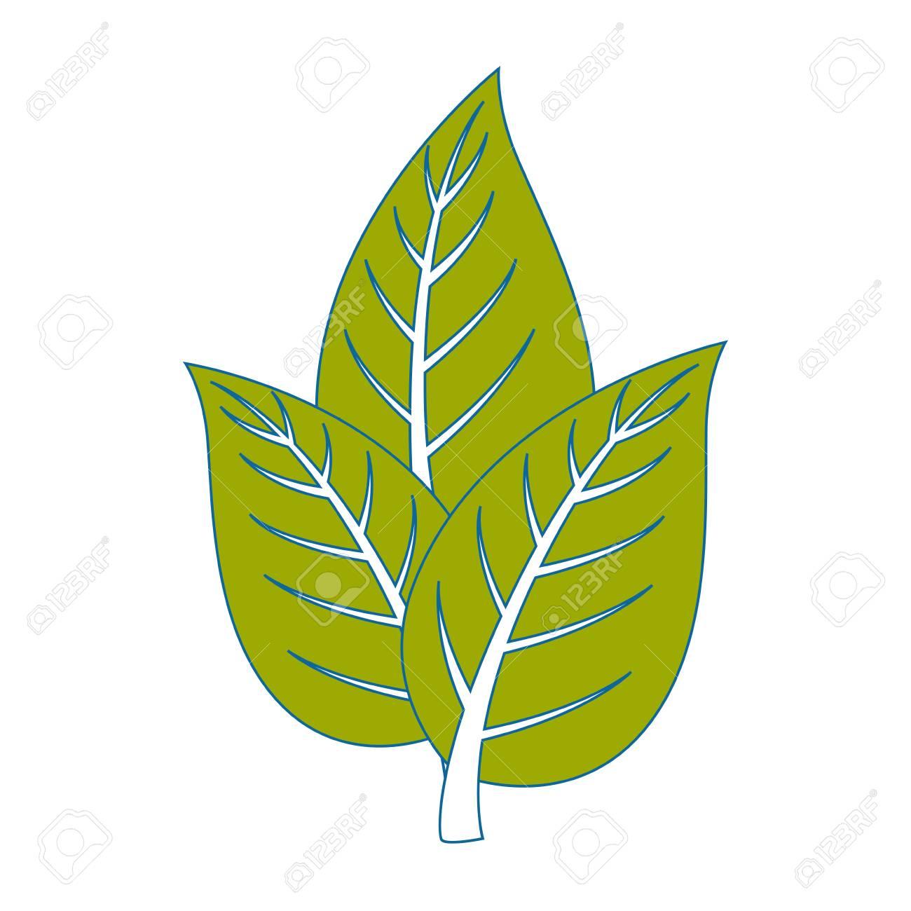 Diseno Grafico Aislado De Tres Hojas Arboles Icono Vector - Hojas-de-arboles