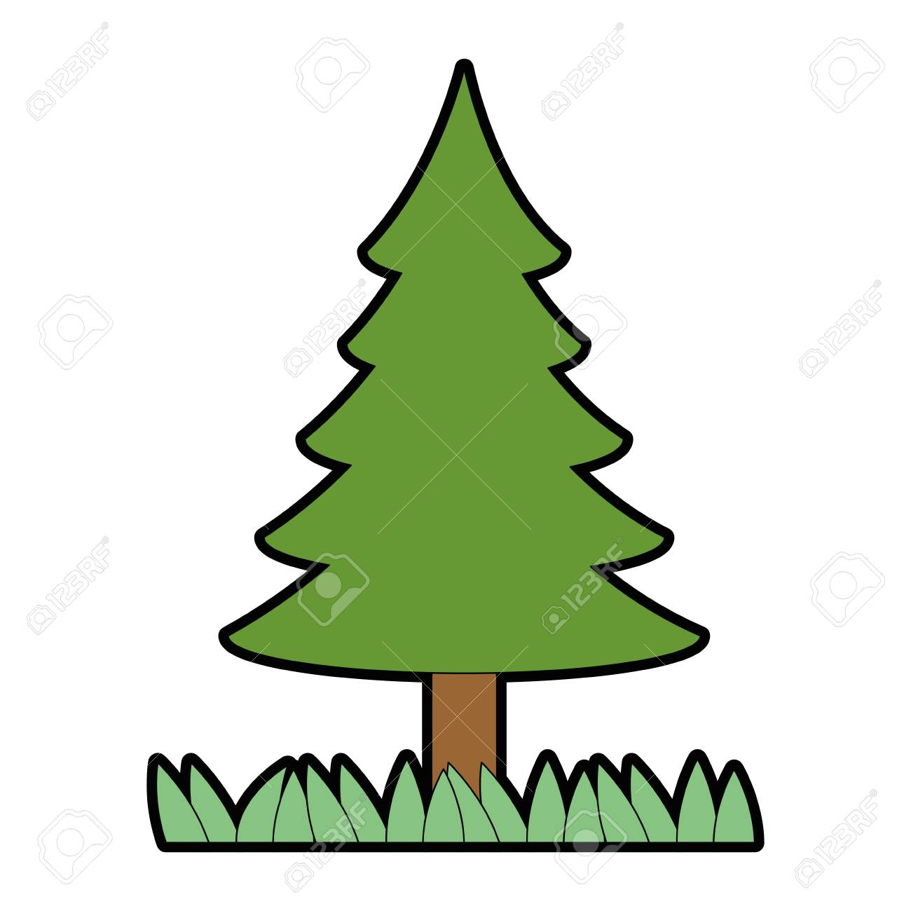 pine tree plant isolated icon vector illustration graphic design rh 123rf com pine tree graphic images pine tree branch graphic