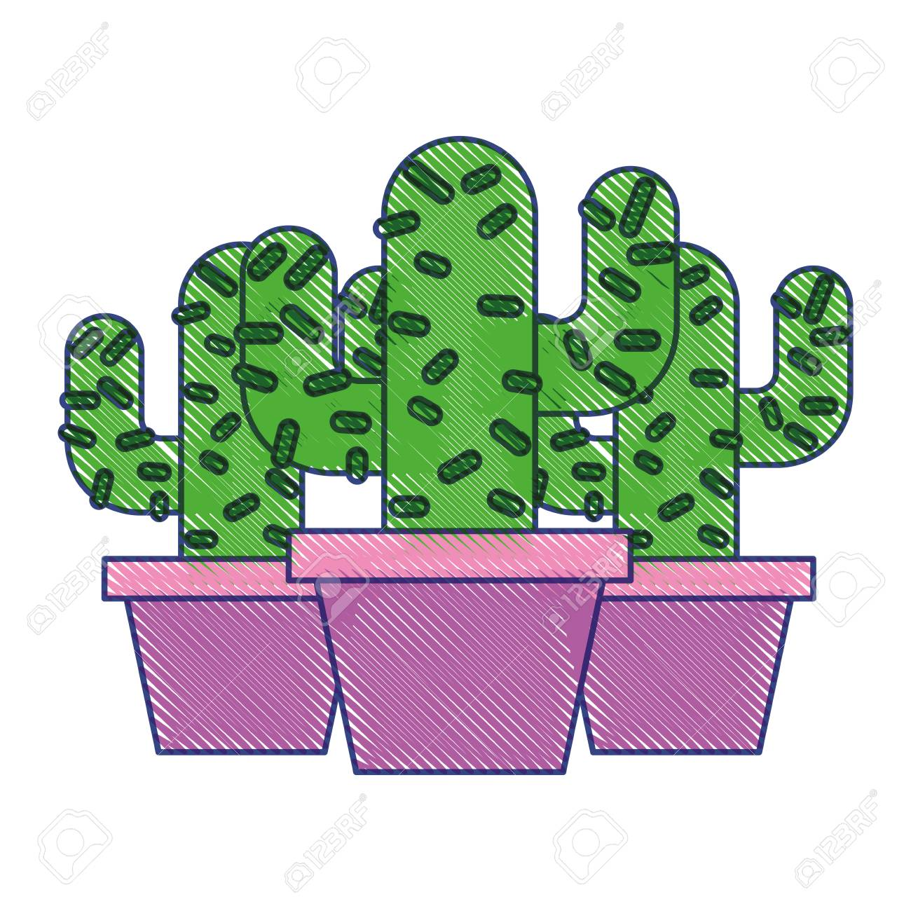 Three Potted Cactus Plant Natural Vector Illustration Draw Design
