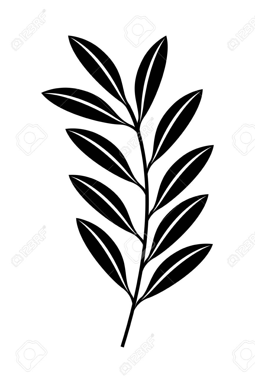 Branch Leaves Nature Foliage Vector Illustration Black And White