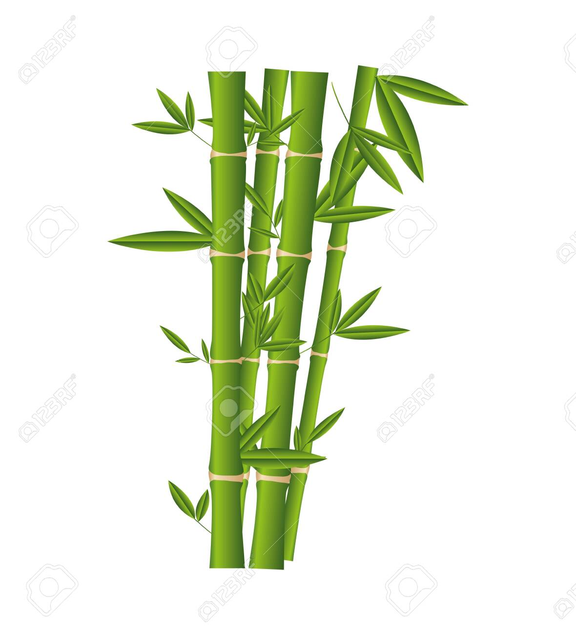 bamboo plant isolated icon vector illustration design - 123480045