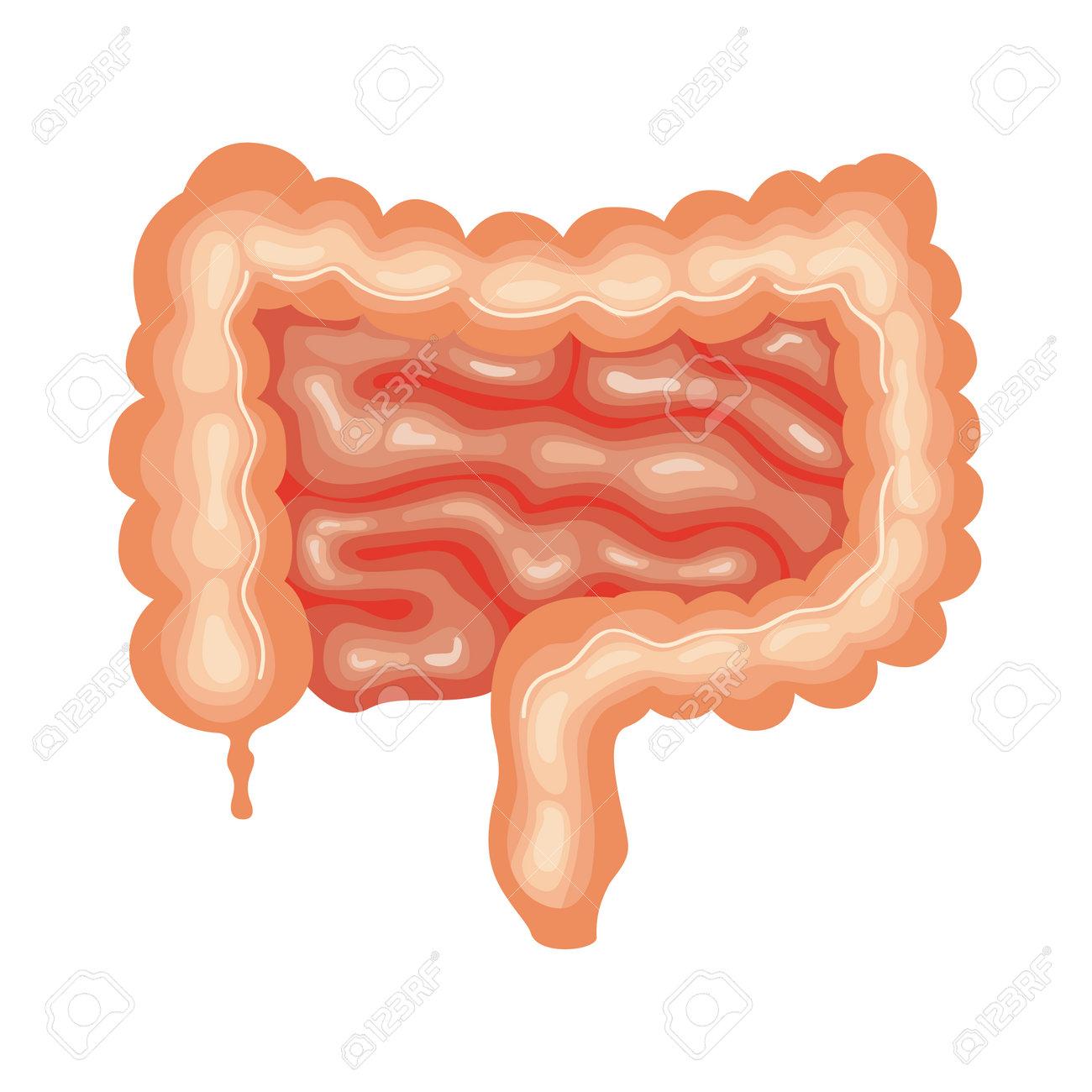 intestine organ human anatomy icon - 167623248