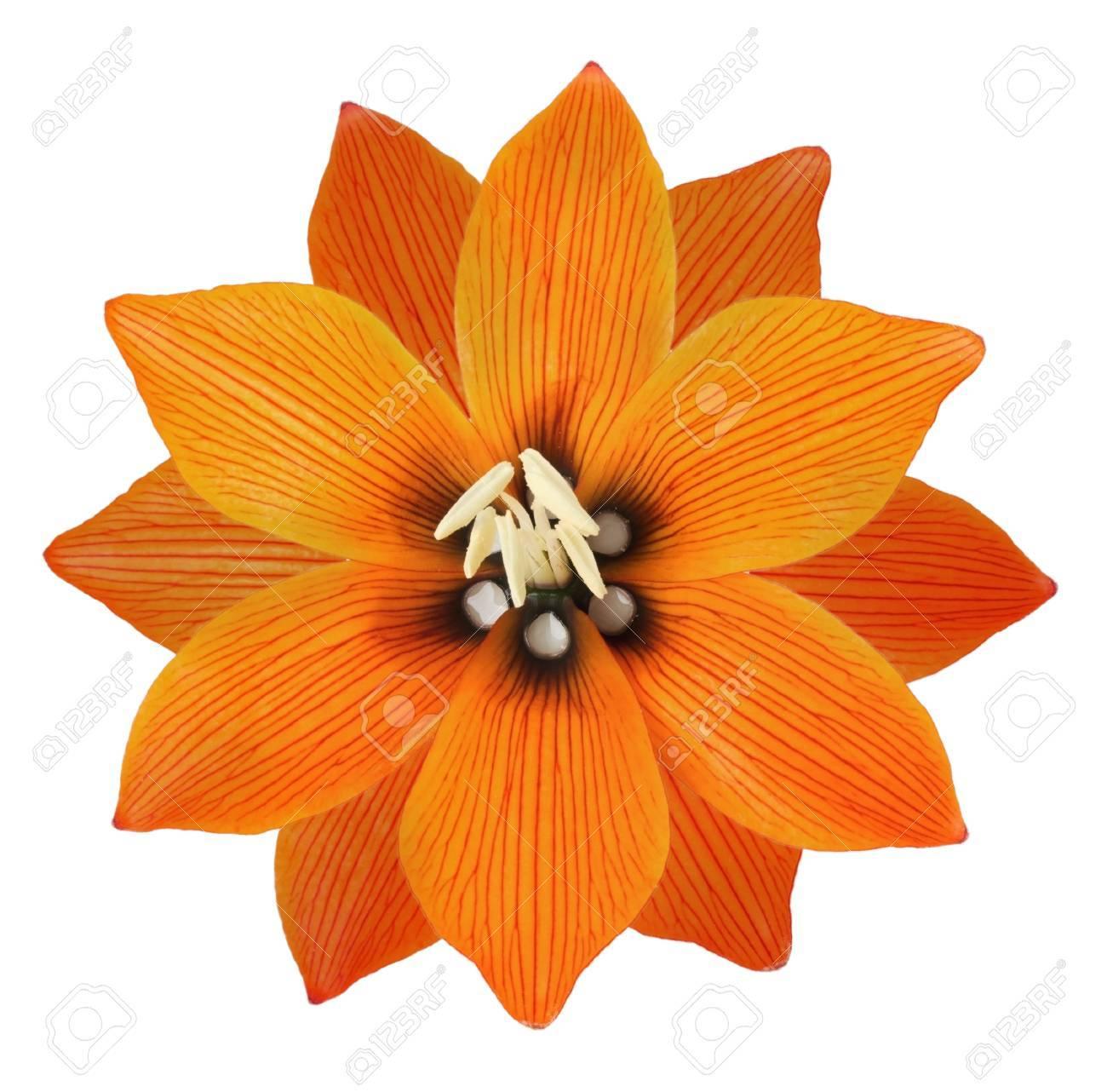 Lilis flower on a white background stock photo picture and royalty lilis flower on a white background stock photo 28800084 izmirmasajfo