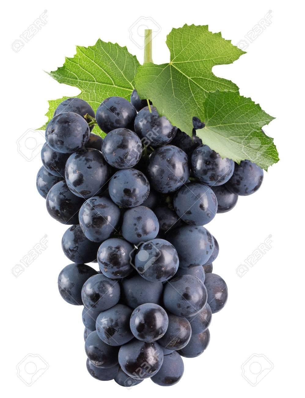 Paarse Druiven Geisoleerd Op De Witte Achtergrond Royalty Vrije Foto Plaatjes Beelden En Stock Fotografie Image 62162352
