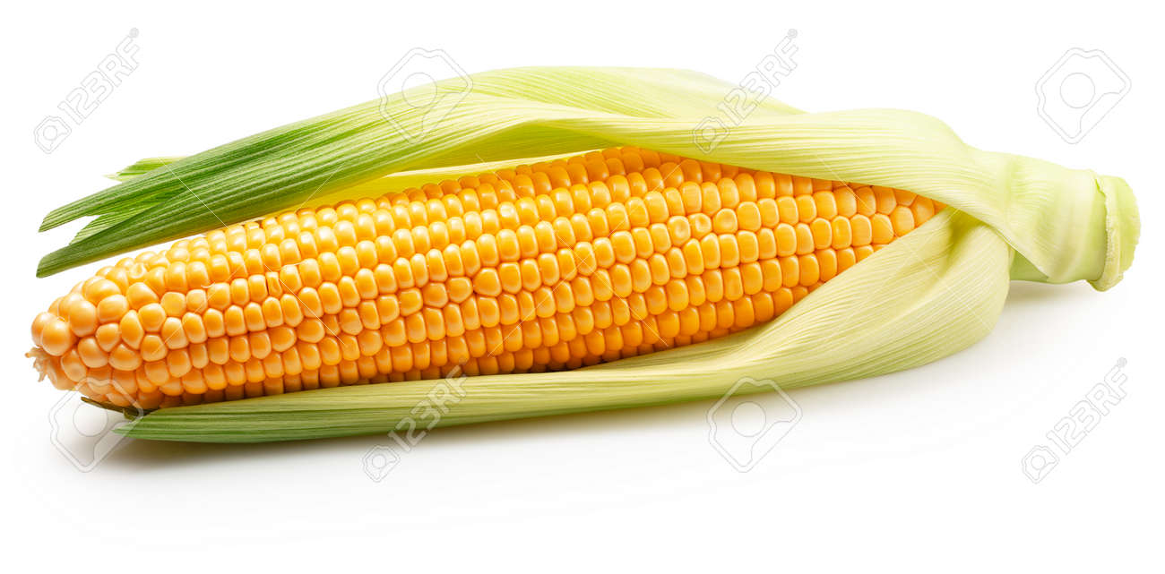 ear corn with husk isolated on a white background. - 155977768