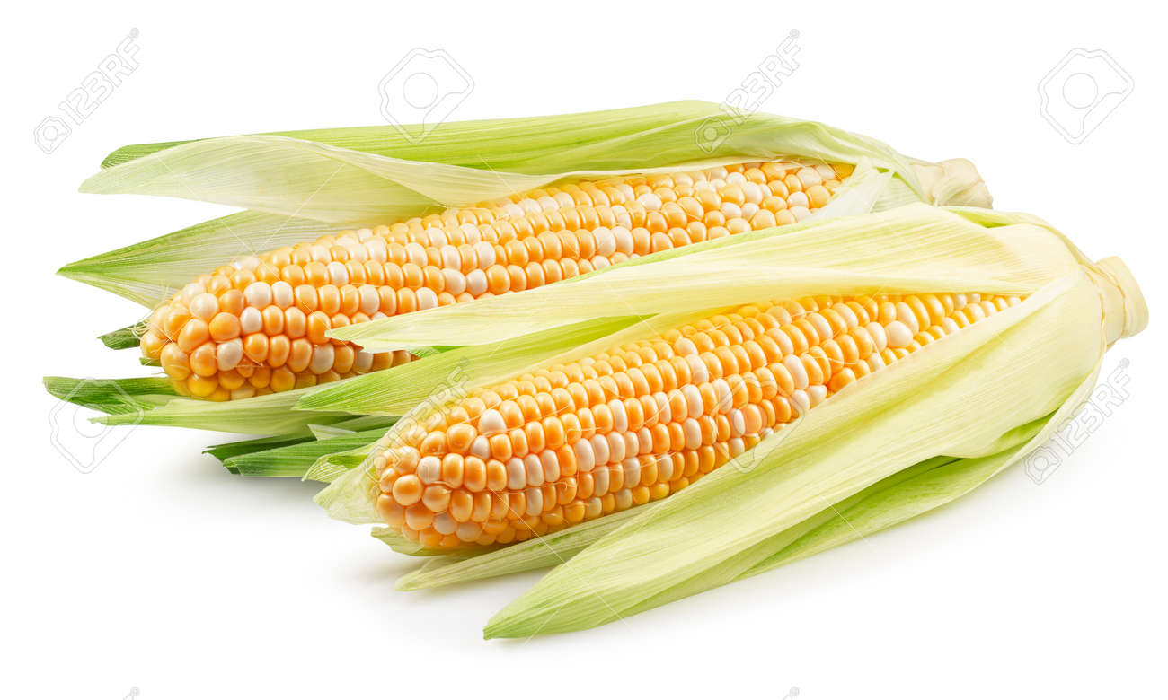 corn ears isolated on a white background. - 159488718