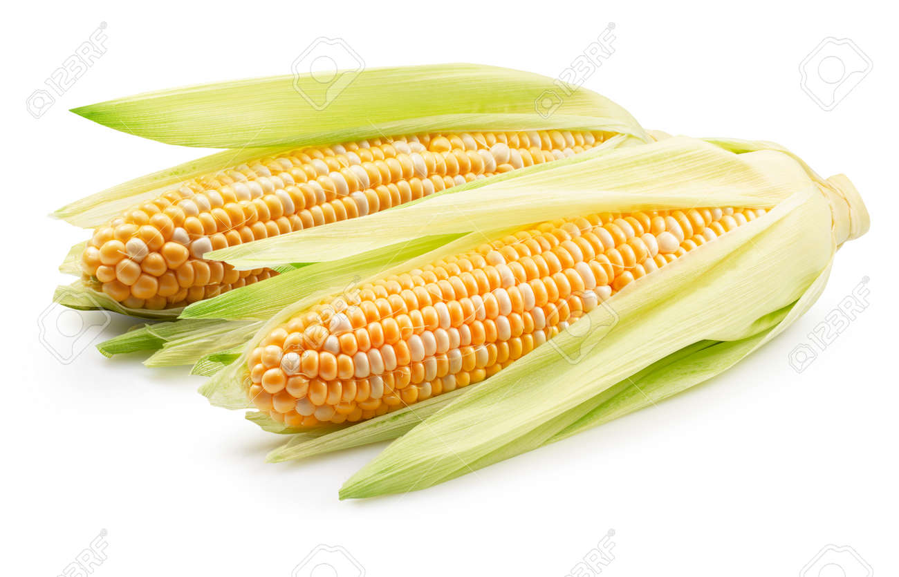 corn ears isolated on a white background. - 167472315