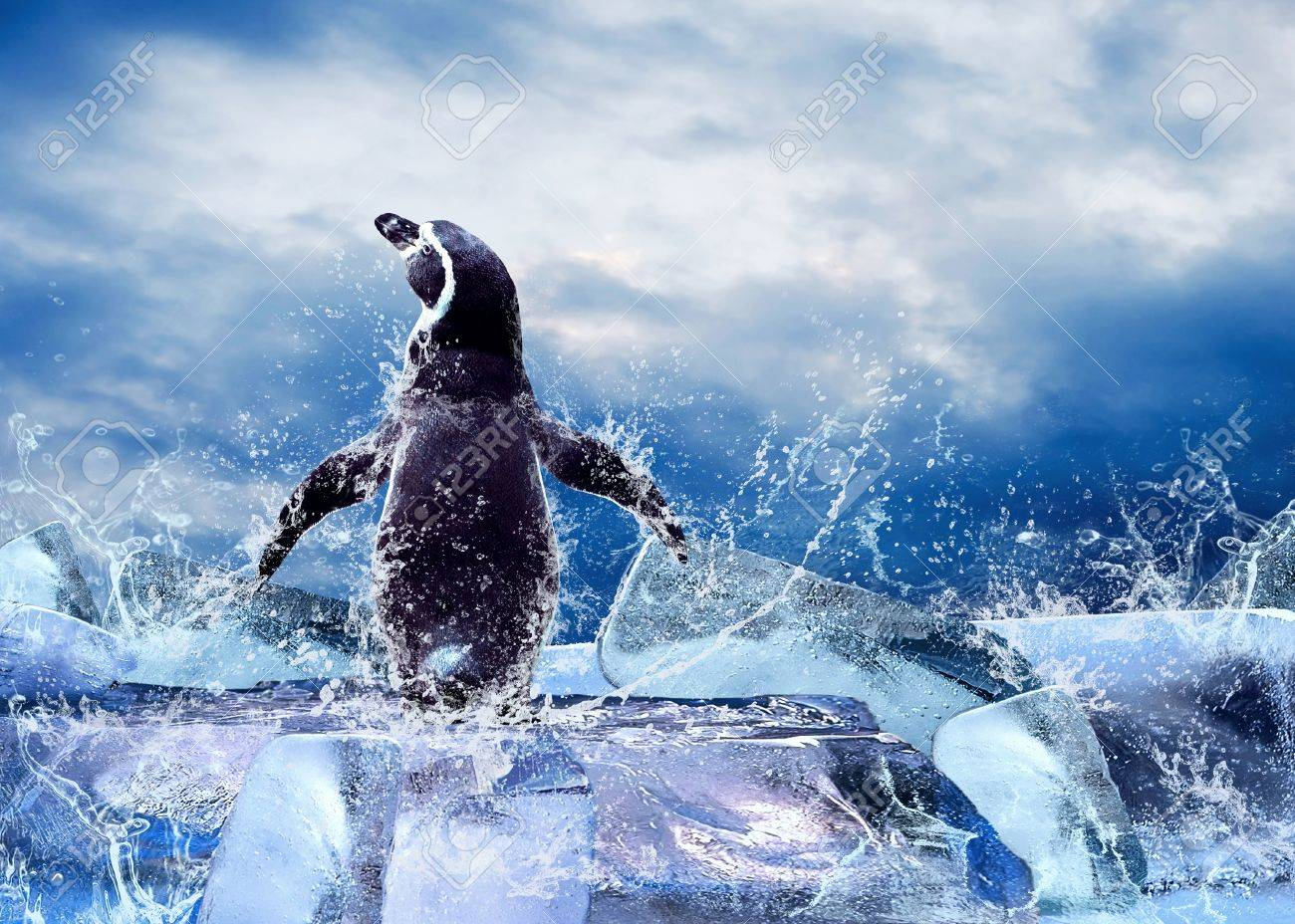 Penguin on the Ice in water drops. - 9850948