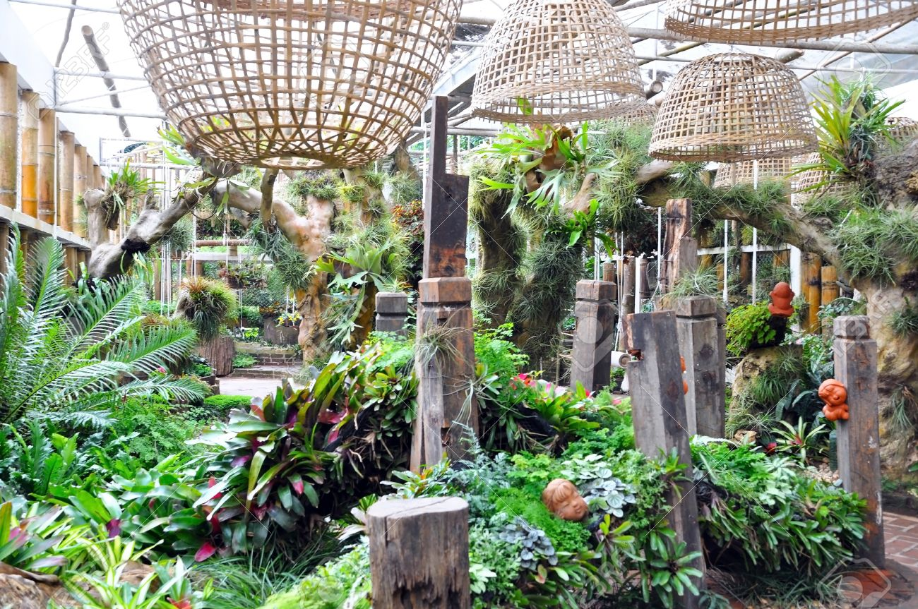 Indoor Garden And Ornamental Plants Stock Photo, Picture And Royalty ...