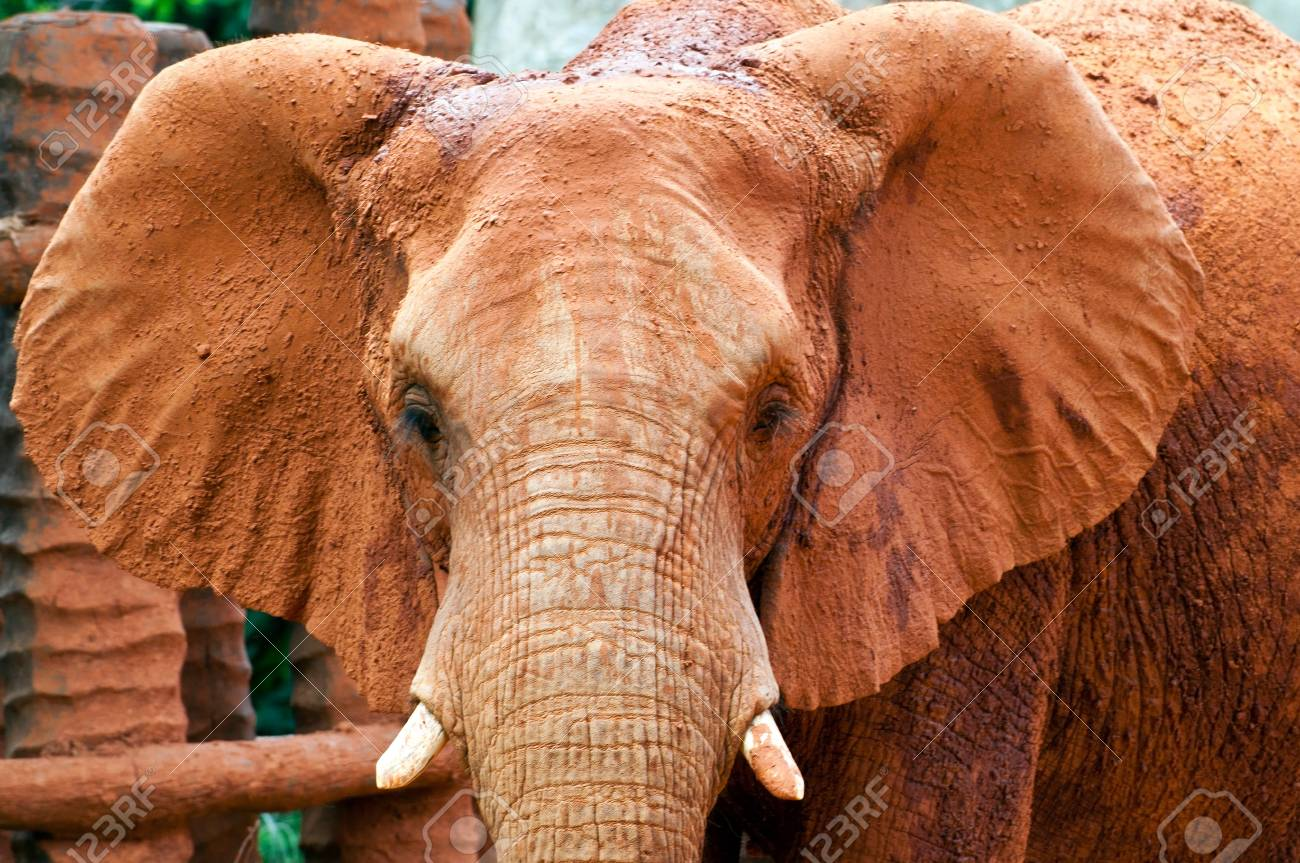 Close up of an african elephant grazing Stock Photo - 14621432