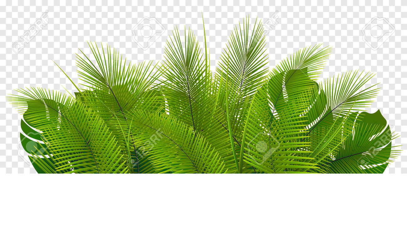 Tropical vegetation. Green leaf pile isolated on transparent background. - 154894196