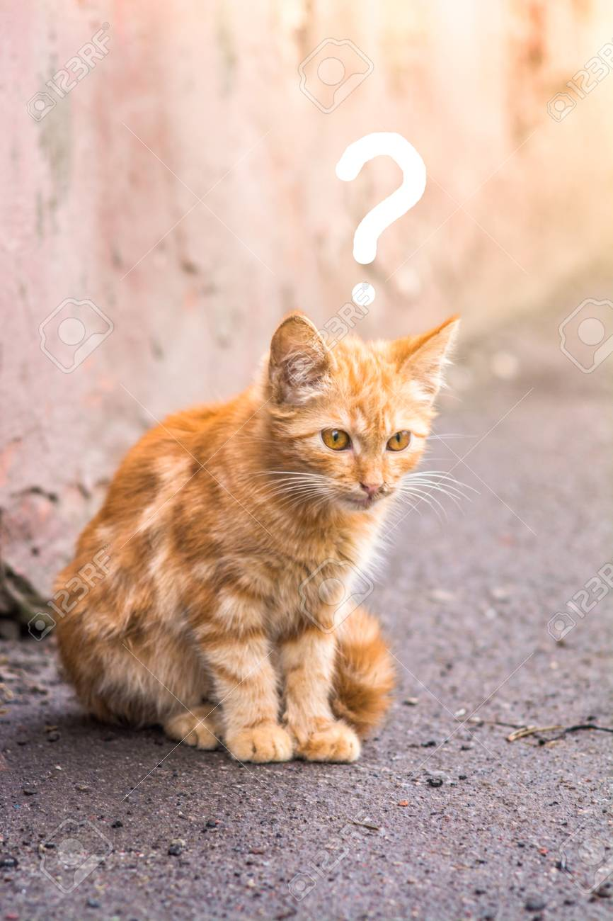 Image result for images of cat with question mark