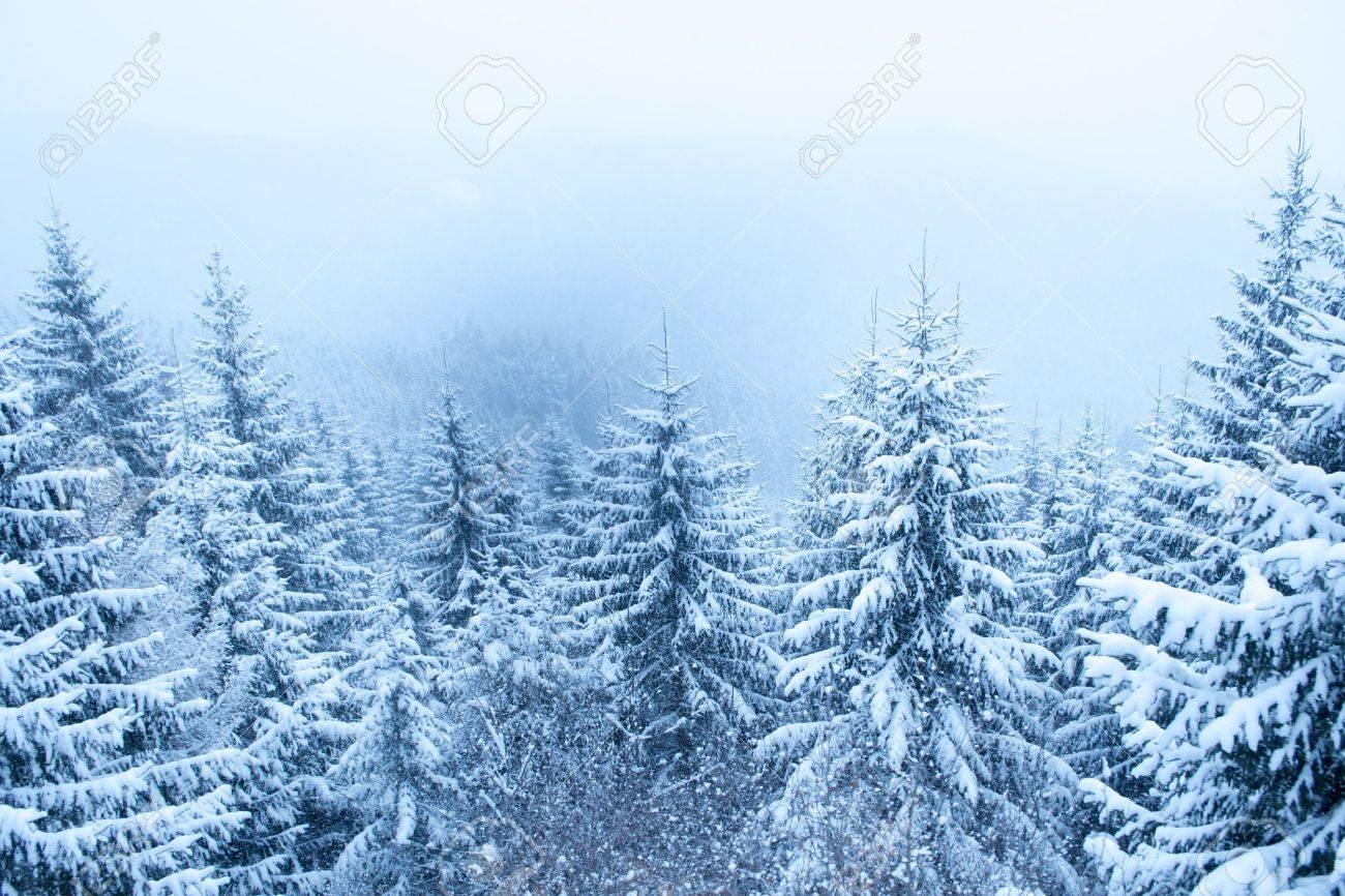 snowfall over mountain winter forest Stock Photo - 14718903