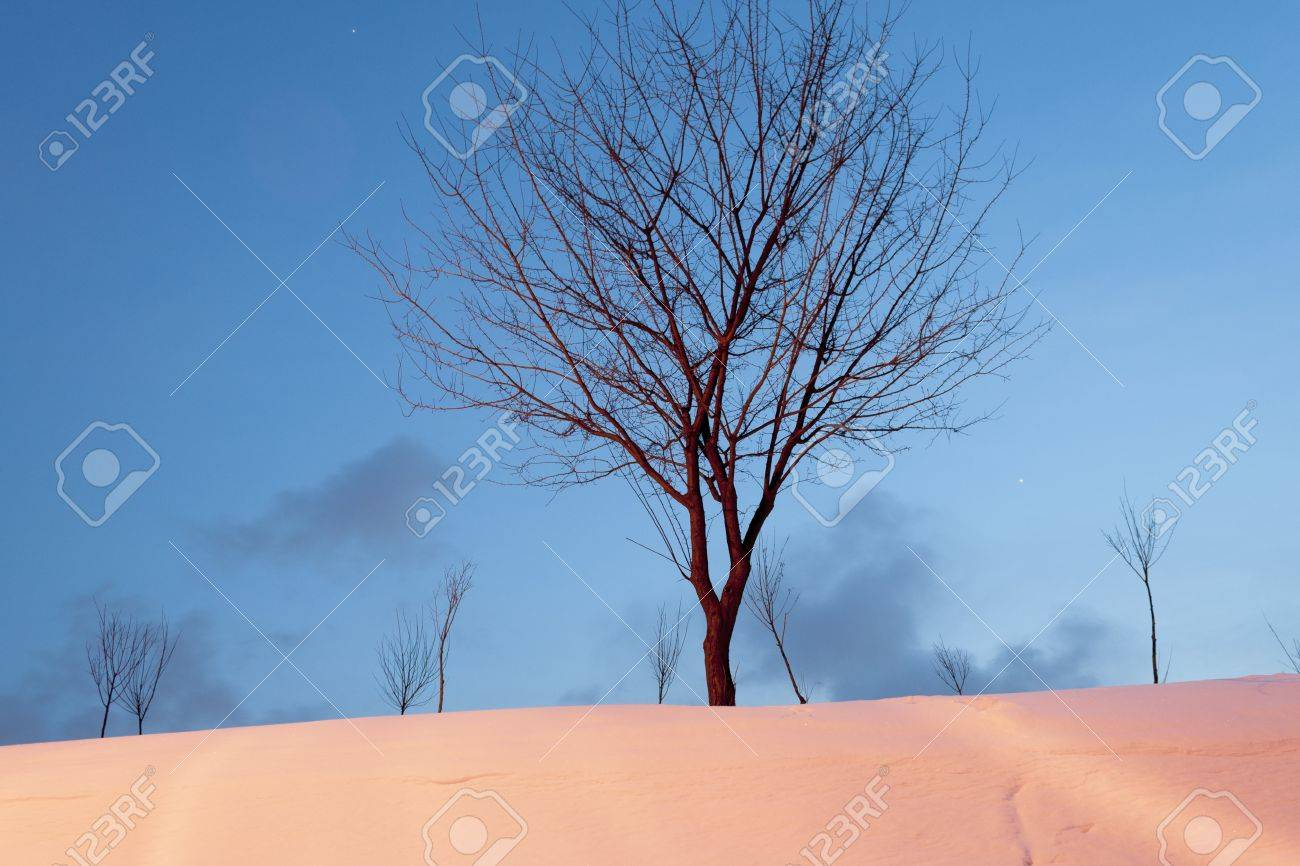 winter bare tree on the twilight snowfield Stock Photo - 14843569