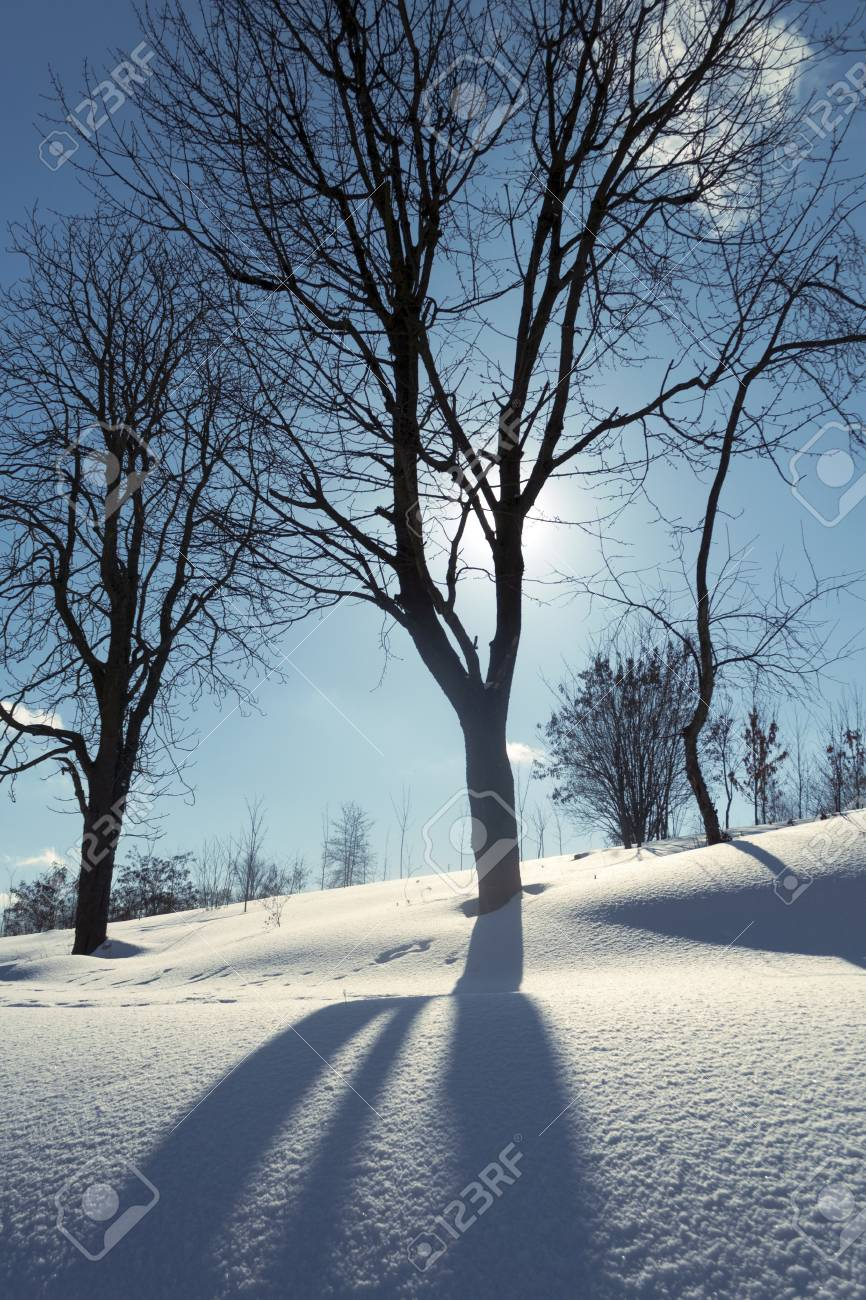 winter bare tree by bright sunny day Stock Photo - 14843580