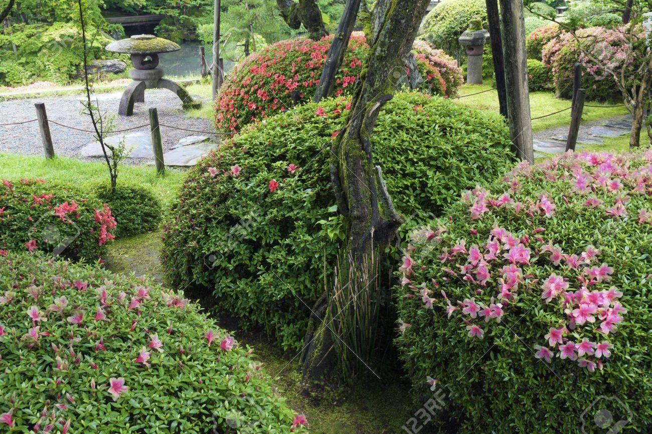 Japonais Jardin Zen Avec Des Buissons D Azalee Fleur De L Ete Banque