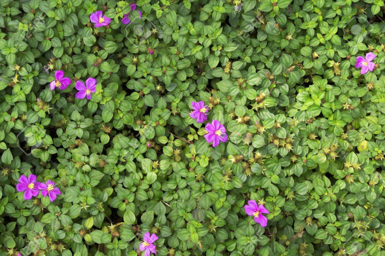 Fresh Natural Background With Small Green Leafs And Pink Flowers