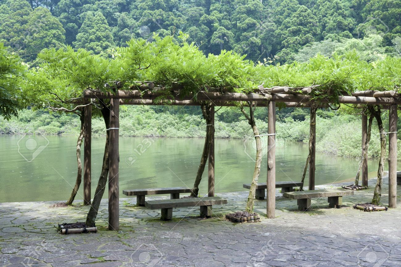 Fresh Wisteria Branches Entwined Forming The Arbor Next To The