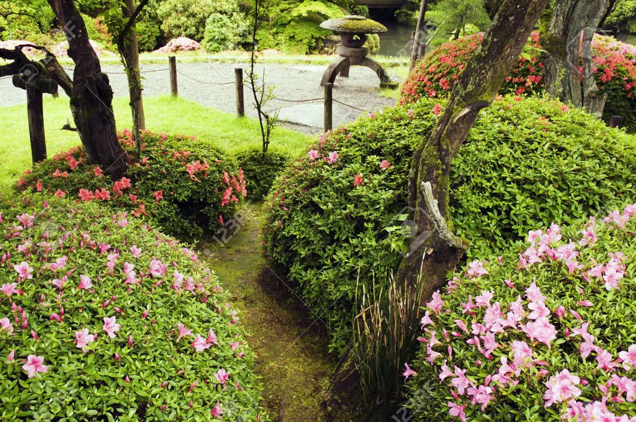 Buissons D Azalee Fleur Dans Le Jardin Zen Japonais Banque D Images