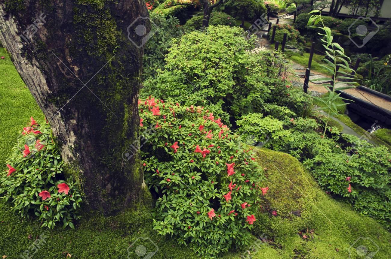 Plantes De Fleurs Humides Fraiches Dans Le Jardin Zen Japonais D Ici