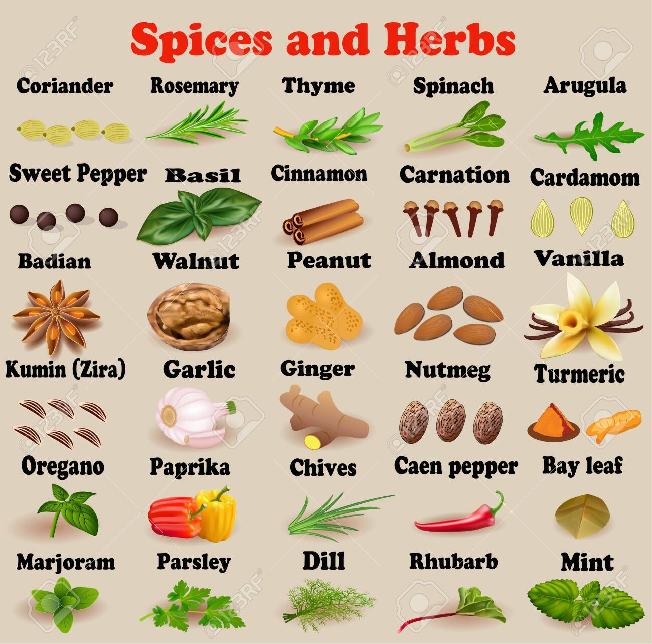 Illustration set of spices and herbs for cooking - 139230404