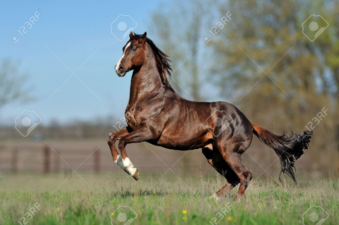 English Thoroughbred Horse Jumping On The Beautiful Background Stock Photo Picture And Royalty Free Image Image 30690481