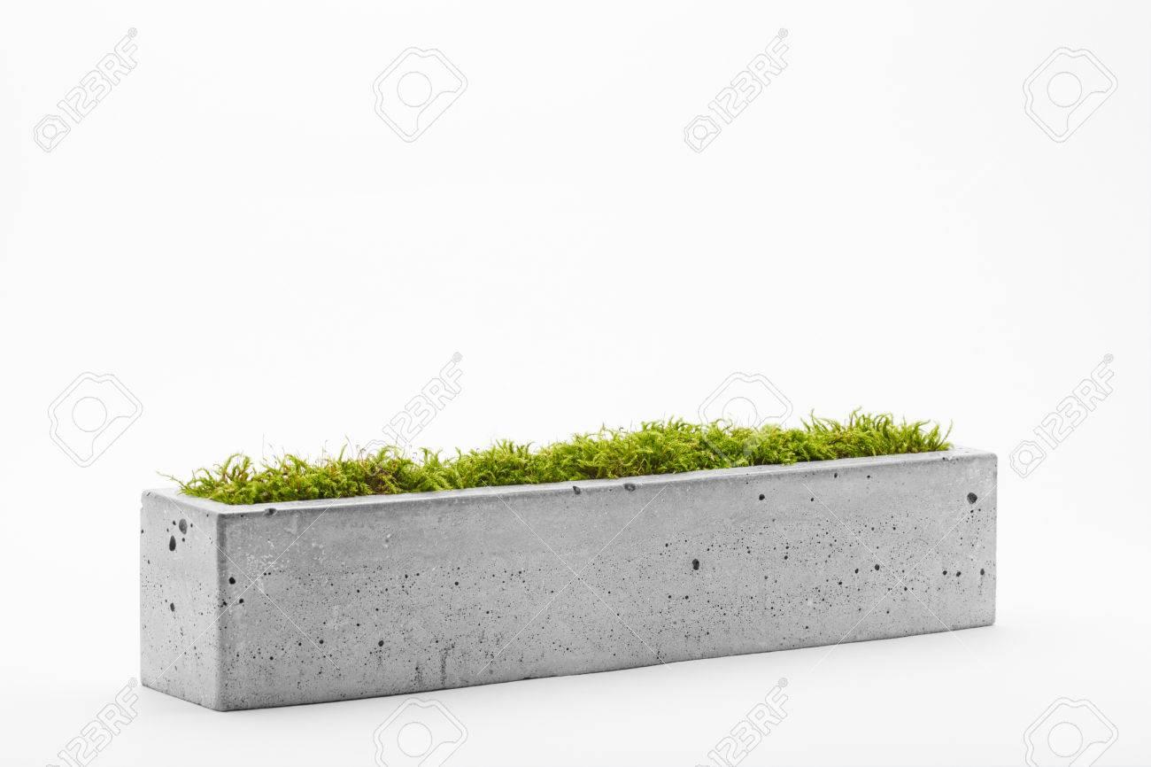 beton-topf mit moos ein weißer hintergrund gefüllt lizenzfreie fotos