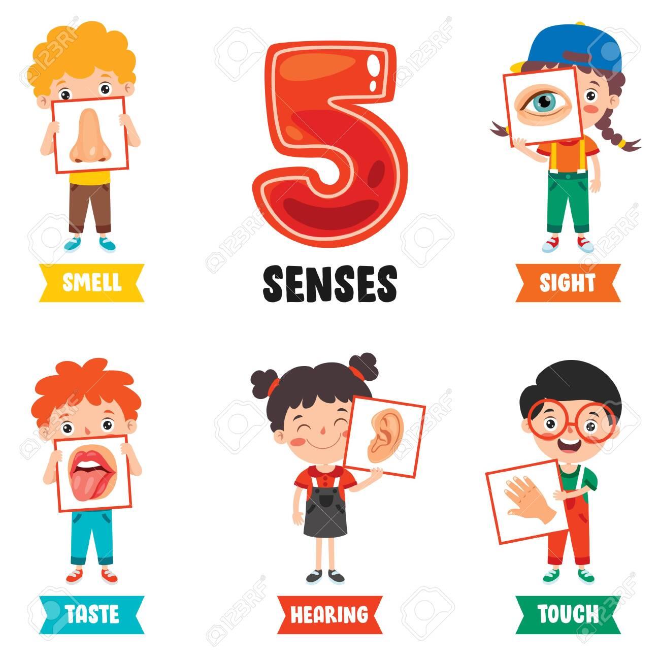Five Senses Concept With Human Organs - 158420169