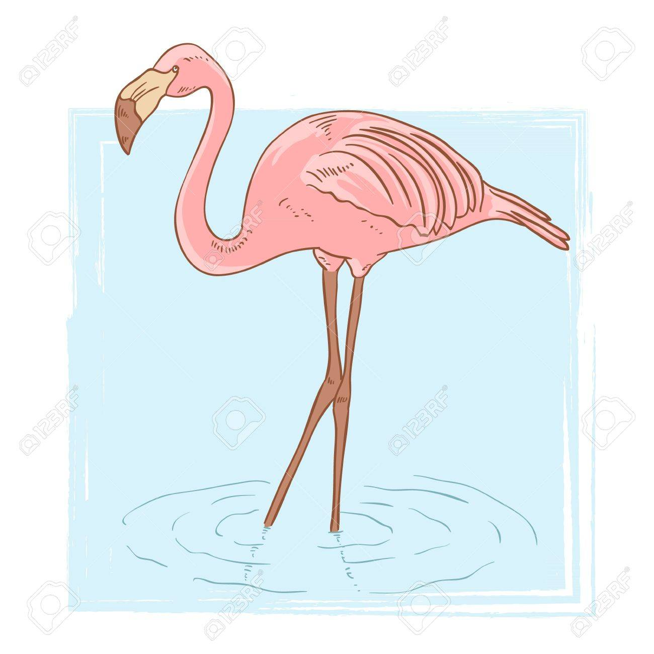 Pink flamingo standing in the water on isolated background Stock Vector - 14399921