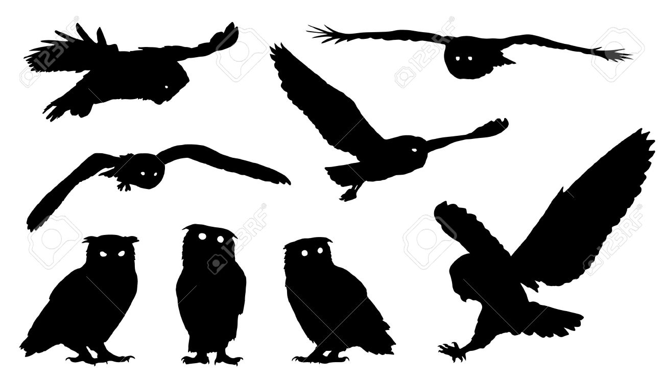owl silhouettes on the white background - 44303977