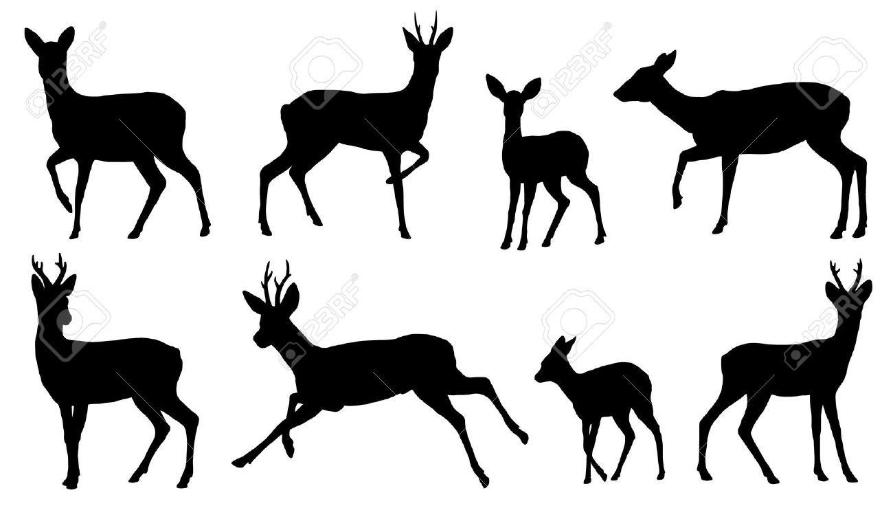 deer stock photos u0026 pictures royalty free deer images and stock