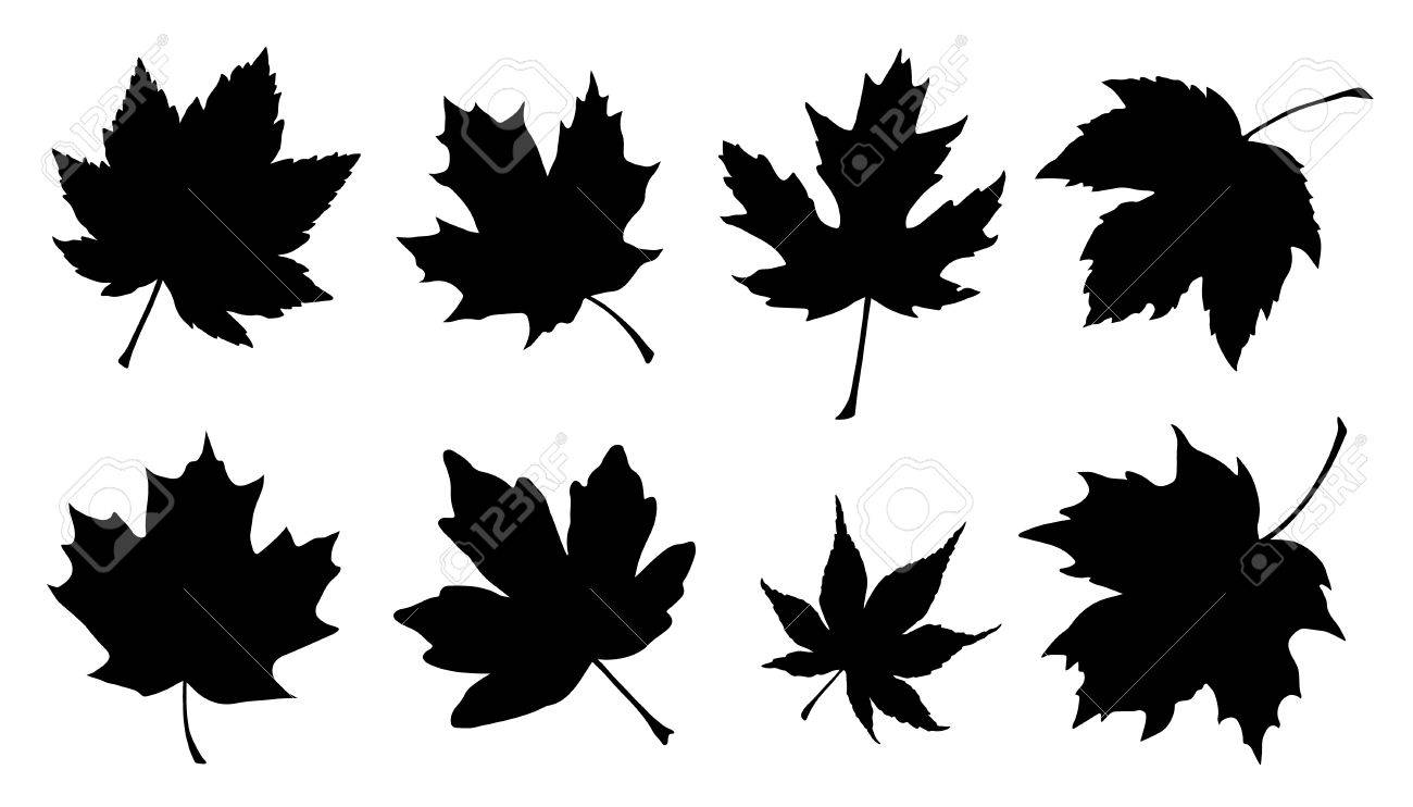 maple leaf silhouettes on the white background royalty free