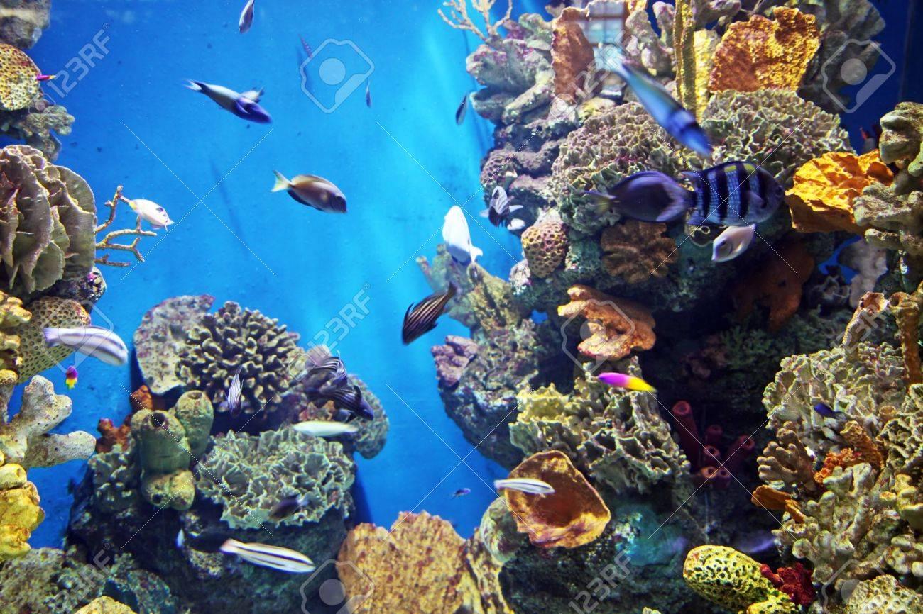 Acquarium with submarine life Stock Photo - 19067591