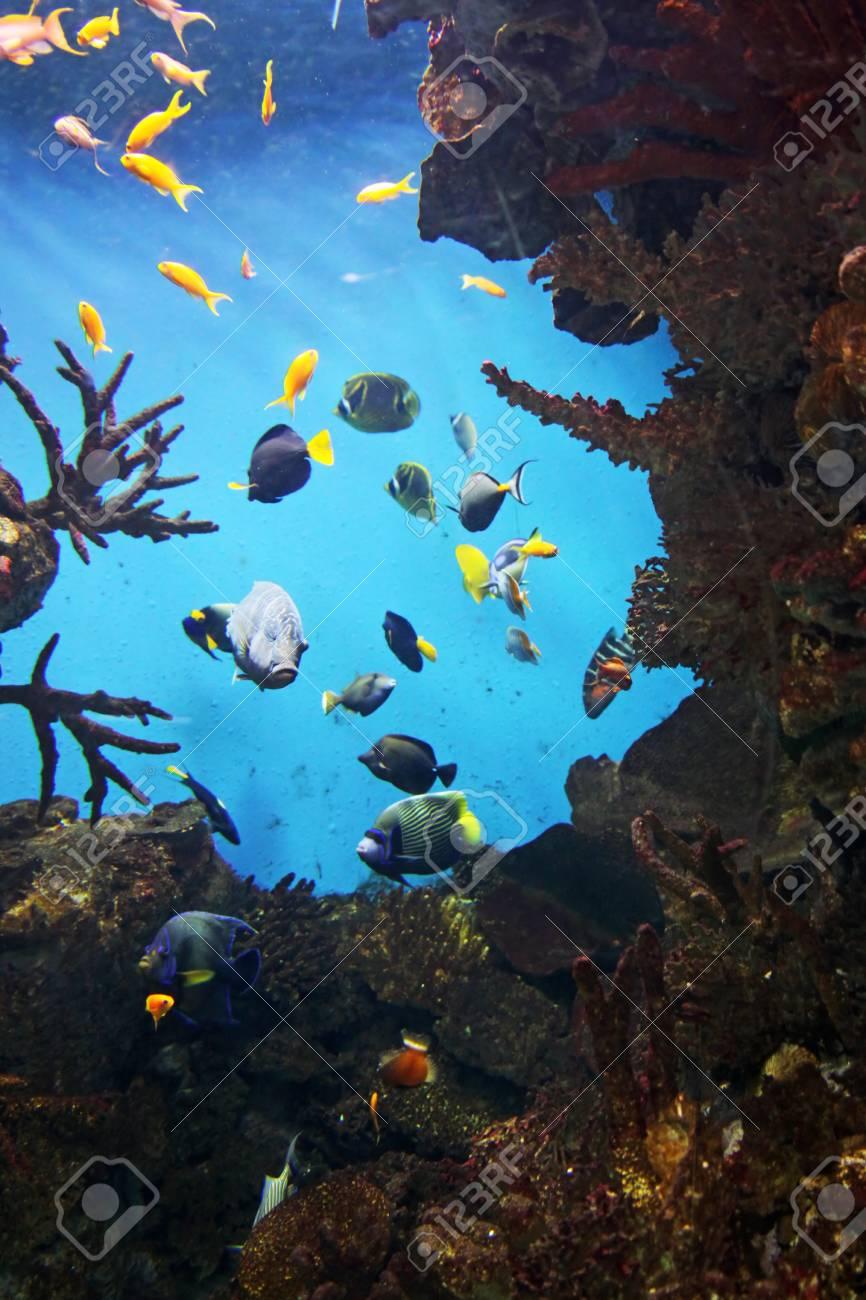 Reef Stock Photo - 19297264