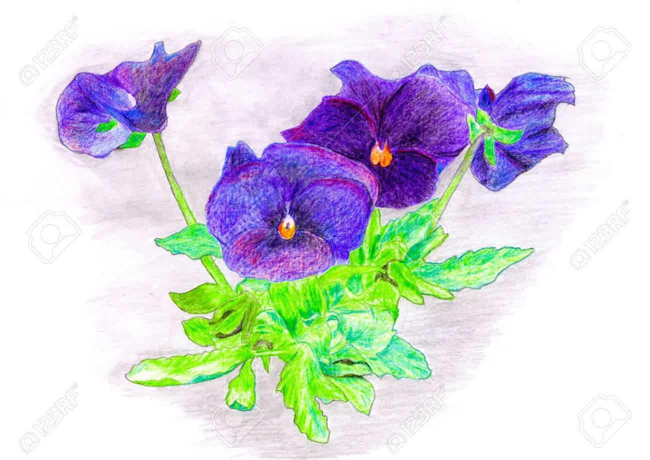 Hand Color Drawn Flowers Bouquet Raster Stock Photo Picture And