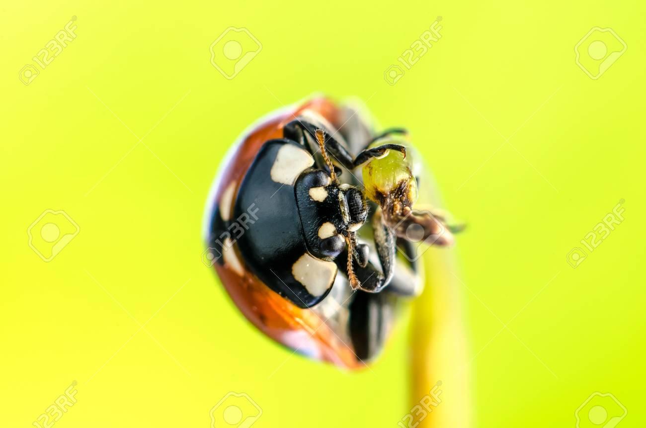 Spring green plants and lucky ladybug macro Stock Photo - 18001948