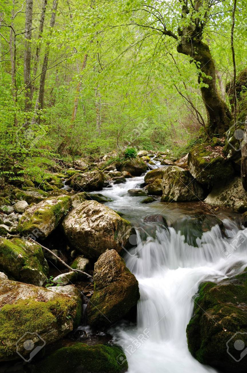 Wild stream between stones in green forest landscape Stock Photo - 9646832