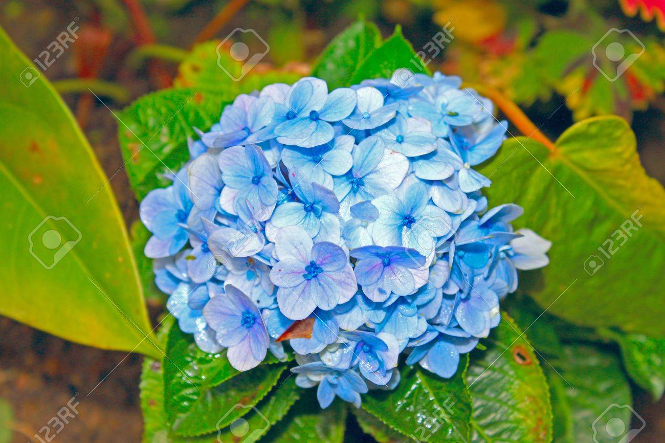 Green Blue Color Blue Color of Tropical Flower