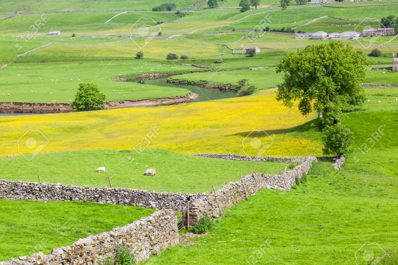 English Agricultural Landscape In The Yorkshire Dales With A Stock Photo Picture And Royalty Free Image Image 94033237