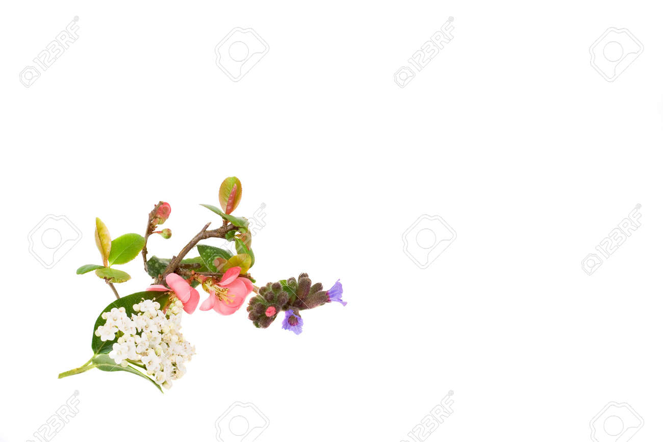 Floral design for bottom left of page Stock Photo - 2645448