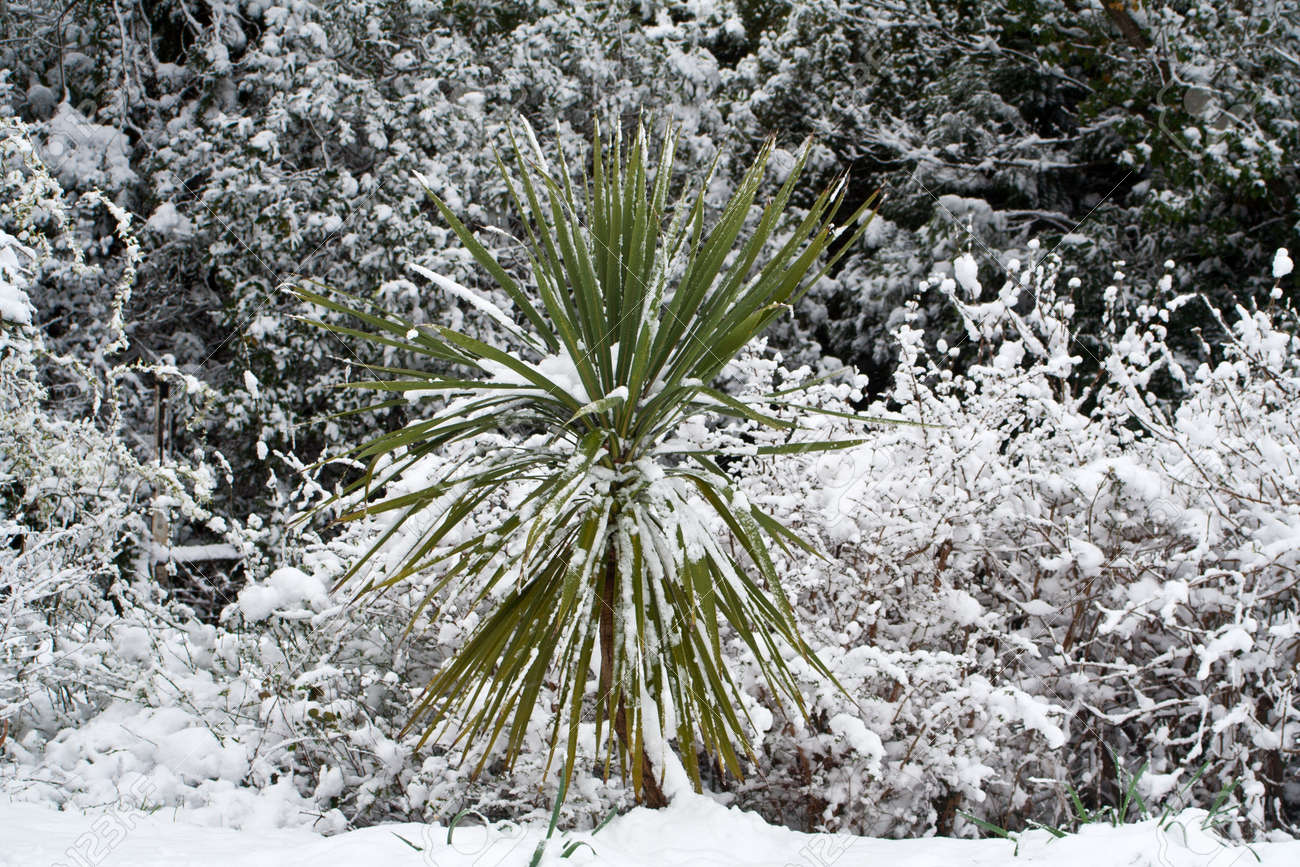 Heavy snow on trees and shrubs, weighing down branches Stock Photo - 18874104