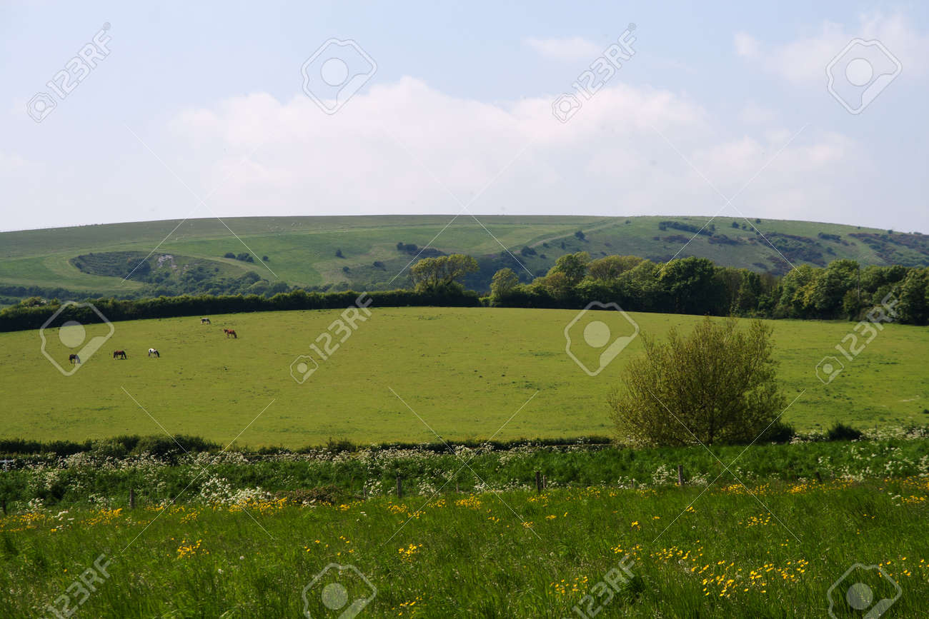 View of the slope of the South Downs, East Sussex with flower meadow in the foreground Stock Photo - 20239592