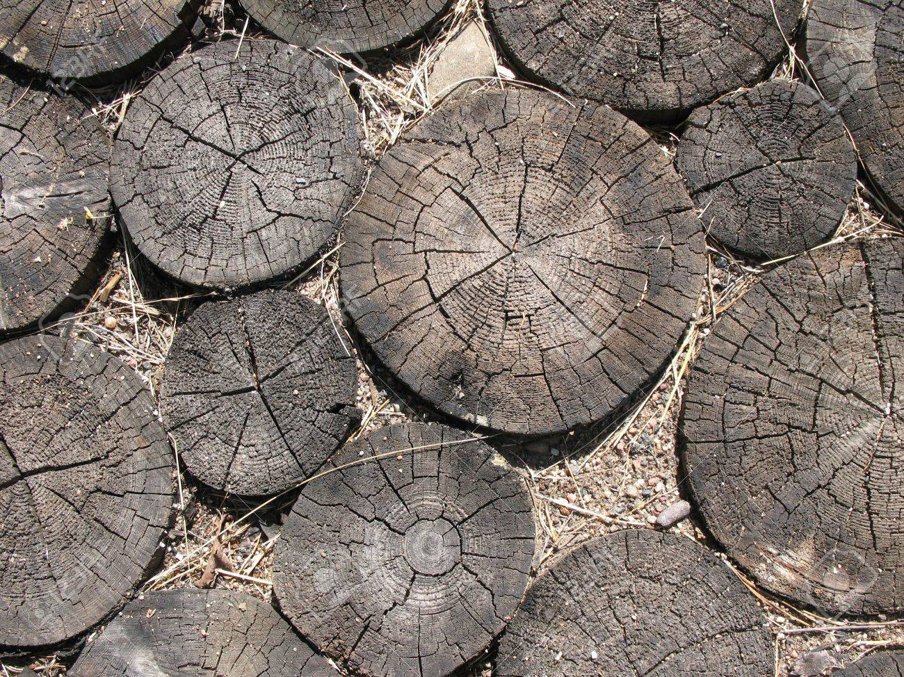 Billets of wood. Paving Stock Photo - 5672900